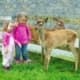 Glendeer Pet Farm